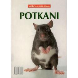 Kol.: Potkani