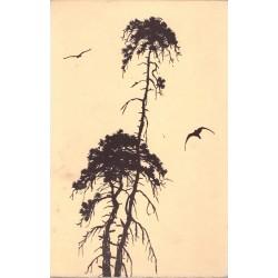 Vrba, J.: Toulky přírodou